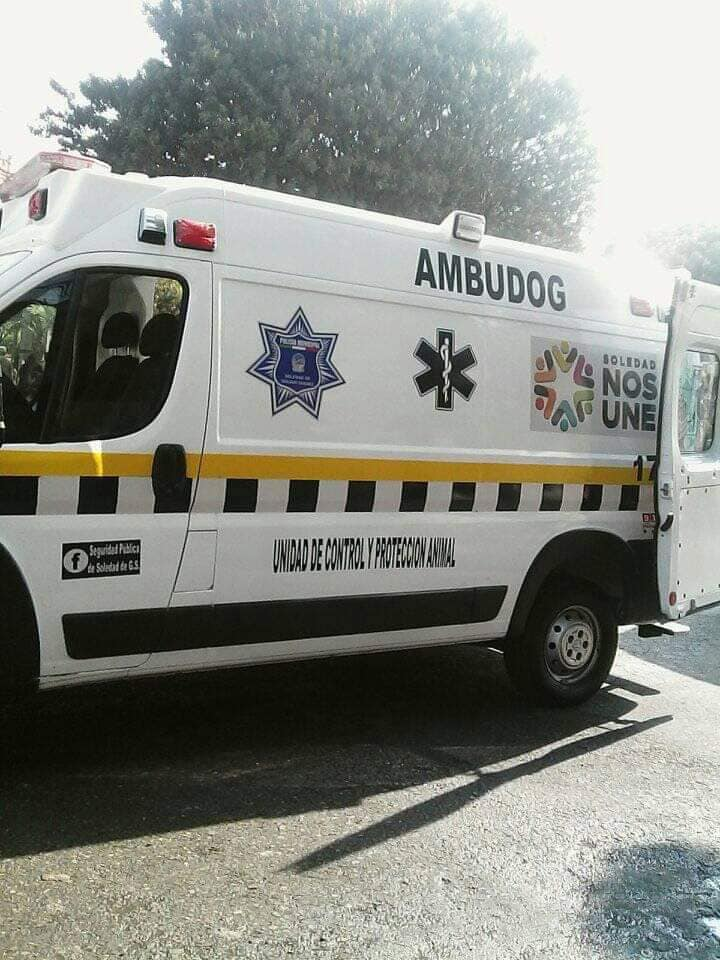 Ambulancia para animales sin hogar