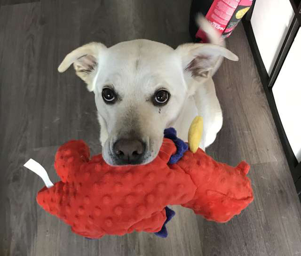Atlas y su juguete