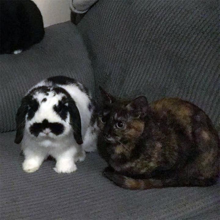 Beau y Lola