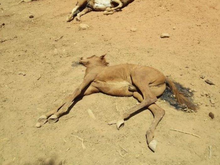Caballito murió de sed