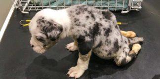 Cachorro paralizado muere después de ser abandonado en navidad