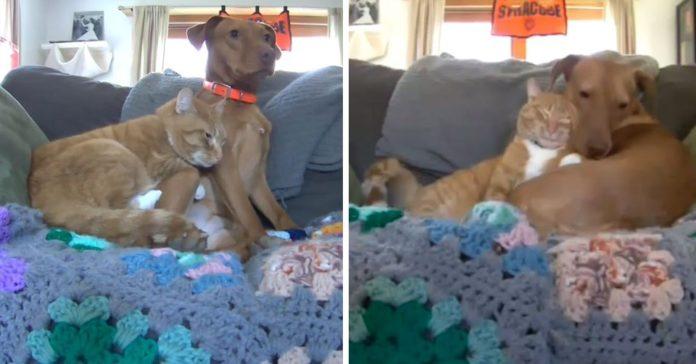 Cámara capta el momento en que un gatito reconforta a un perro ansioso
