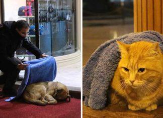 Dentista dedica su tiempo libre a abrigar a los perros y gatos sin hogar