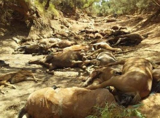 Docenas de caballos salvajes muertos en un pozo de agua seco