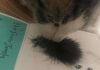 Dulce reacción de un gato al ver el mechón de pelo de su amigo