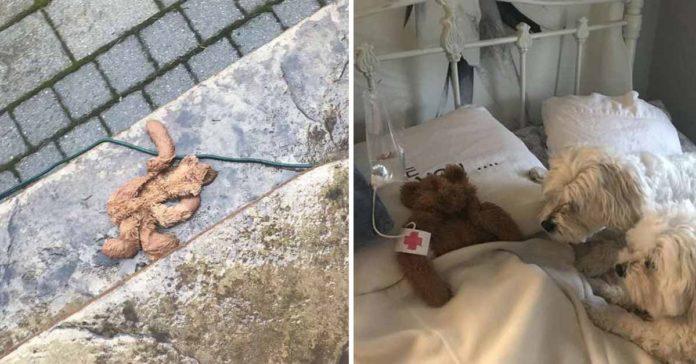 El juguete favorito de este perrito fue sometido a la cirugía más adorable