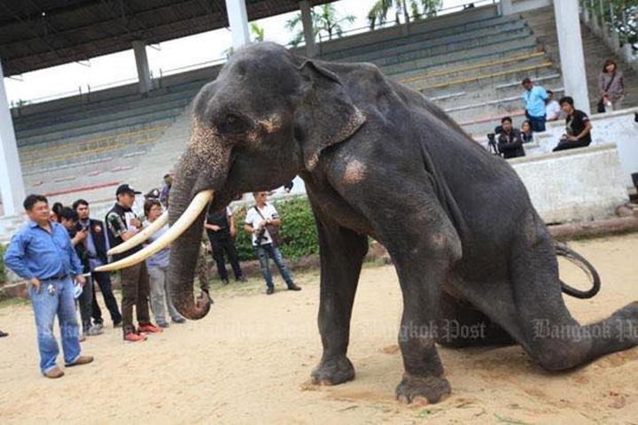 Elefante esquelético en zoo