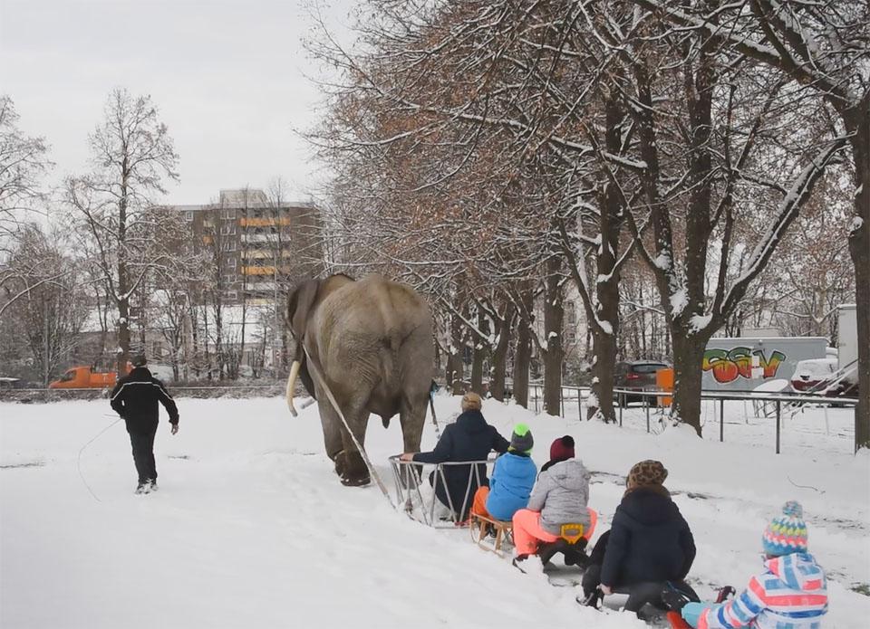 Elefante obligado a pasear niños en trineo