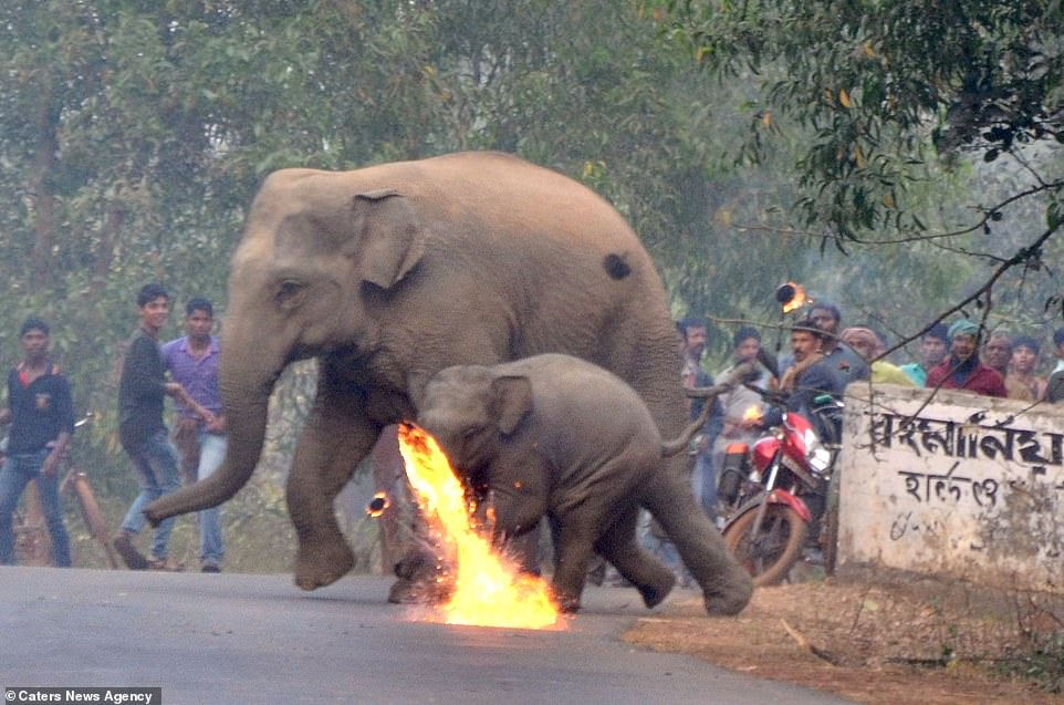 Elefante y su cría
