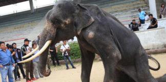 Elefantes esqueléticos son obligados a actuar en zoológico