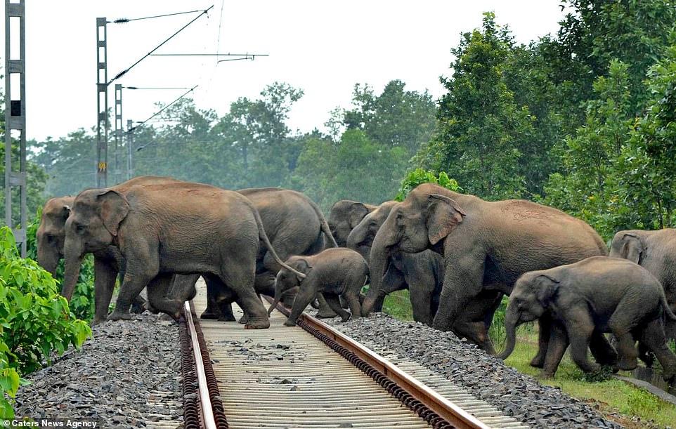 Elefantes huyendo