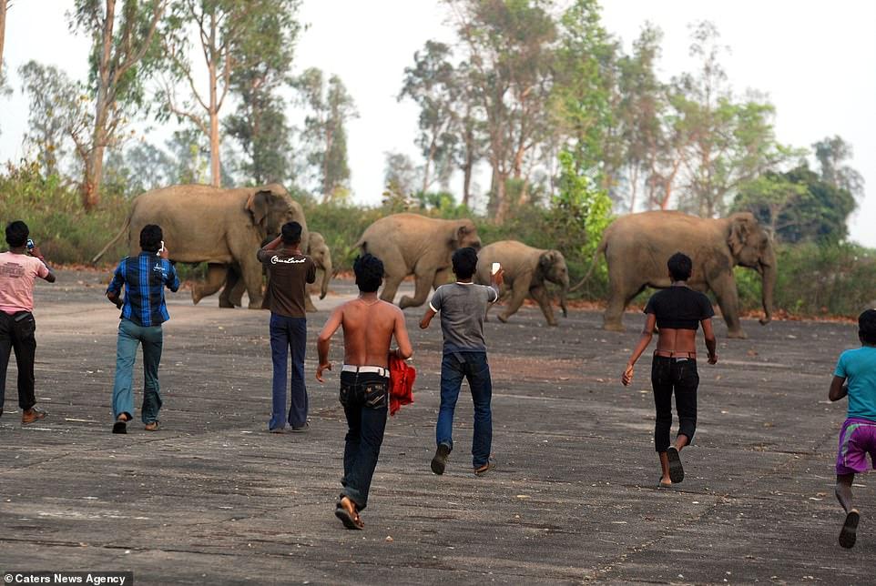 Elefantes son atacados con bombas