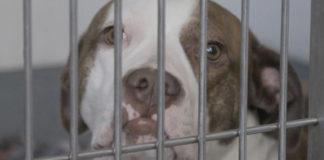 Este adorable perrito fue sacrificado debido a una ley obsoleta e ineficaz