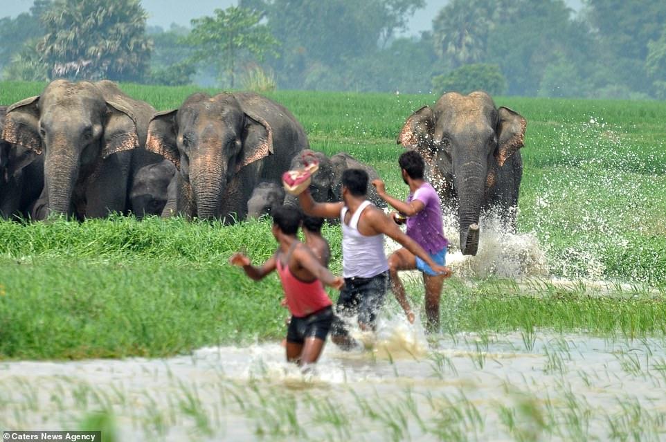 Familia de elefantes persiguen aldeanos