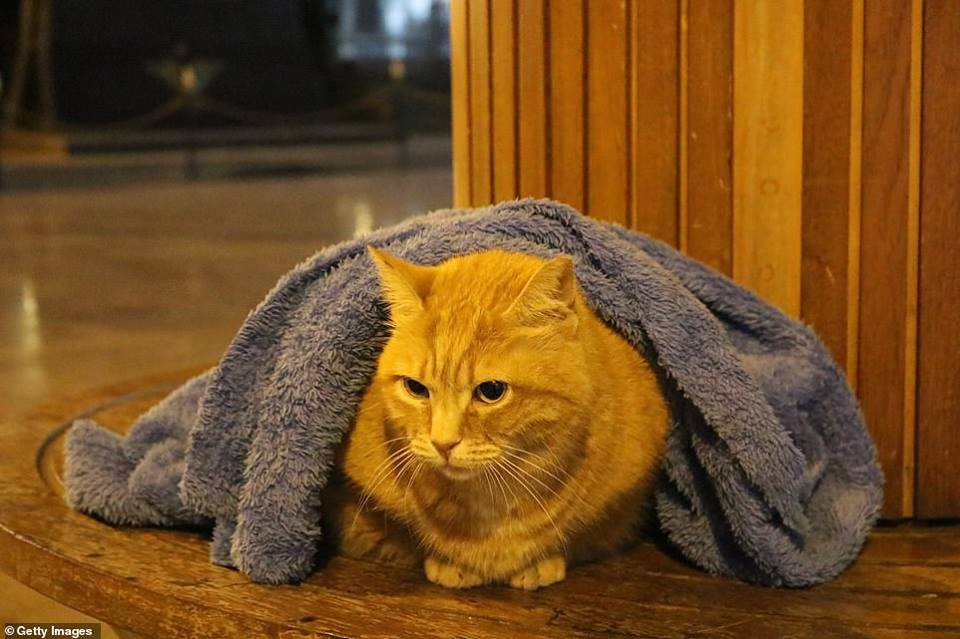 Gatito abrigado
