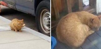 Gatito sin hogar aparece en el patio trasero de una casa y decide quedarse