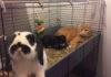 Gatos aman pasar el rato en el recinto del conejito