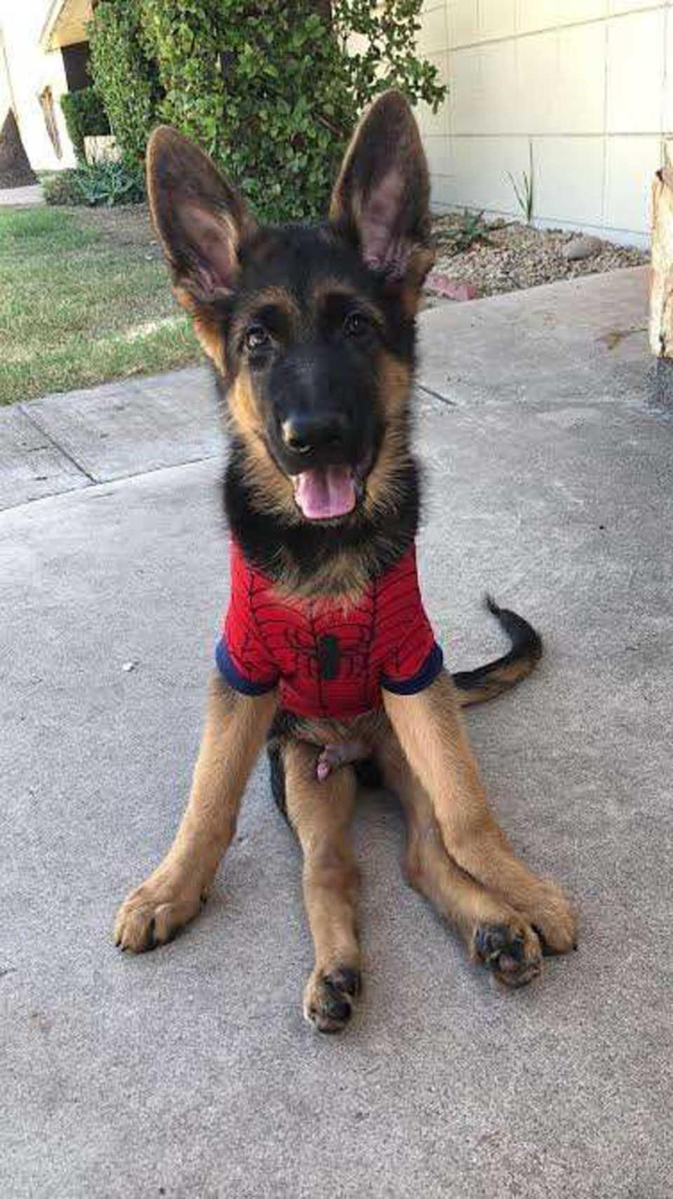 Nico es un perro muy feliz