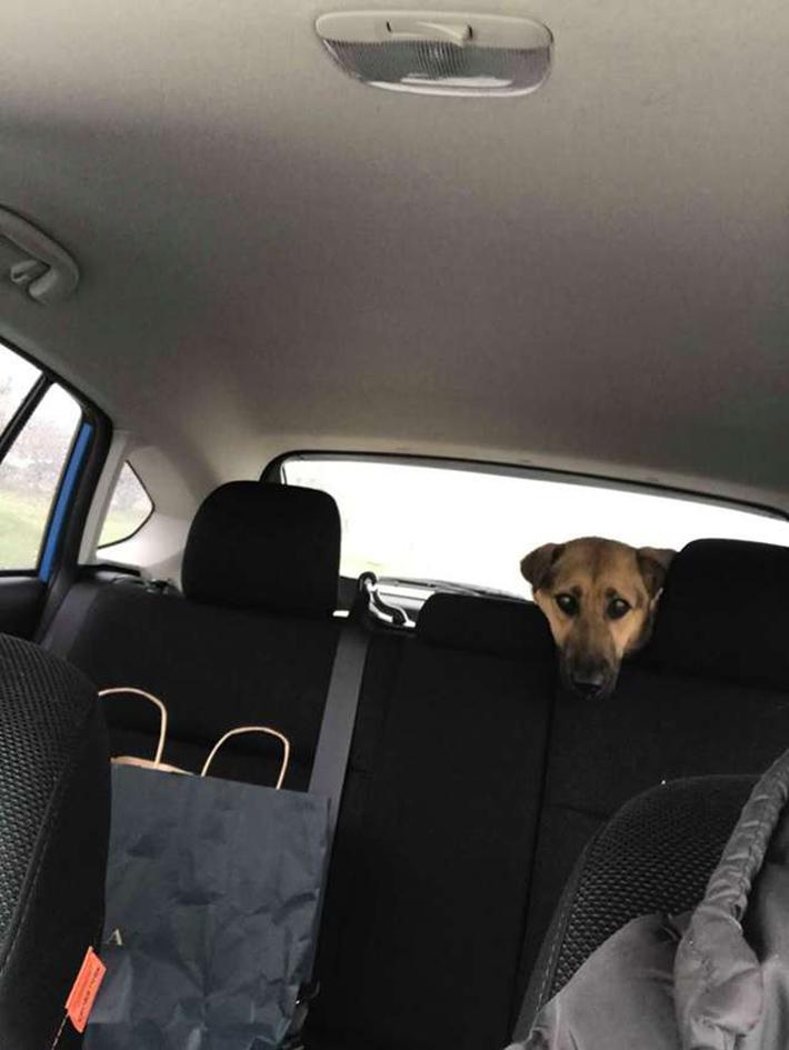 Penelope en el auto