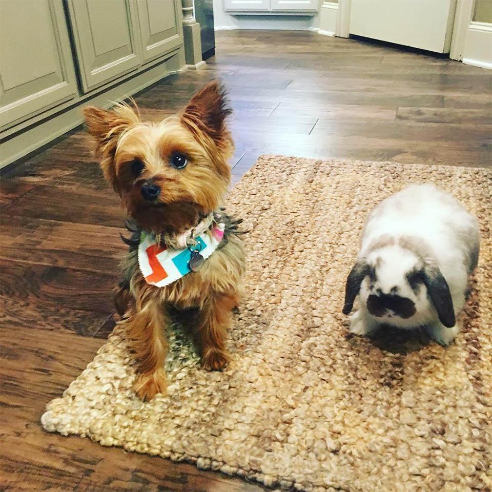 Pepper y el perro