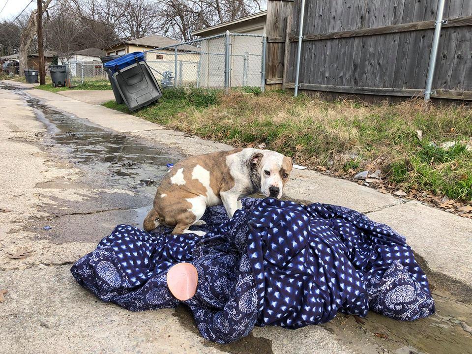 Perrita y su manta