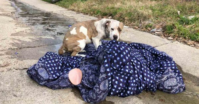 Perrito abandonado en víspera de año nuevo se aferró a su manta