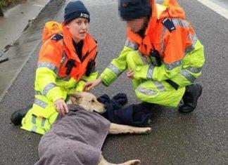 Perrito atropellado esperó a que alguien lo ayudara y conoció a su madre