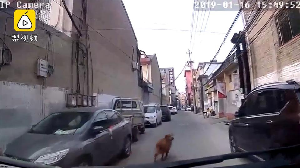 Perrito guiando la ambulancia