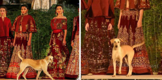 Perrito irrumpe desfile de modas en India