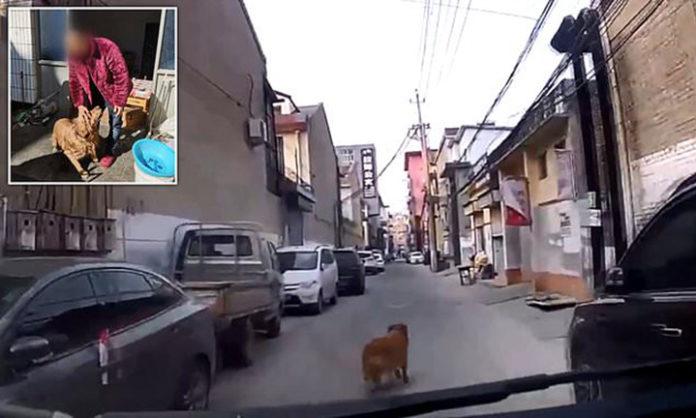 Perrito leal guía una ambulancia hasta su dueño inconsciente