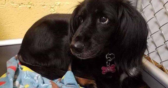 Perrito rescatado de Tailandia lleva tres años esperando a una familia
