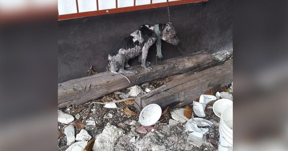 Perro encadenado no podía ni acostarse