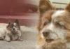Perro espera por 10 años a su familia
