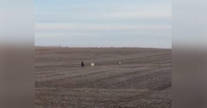Perro perdido es encontrado corriendo con dos amigos inusuales