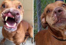 Perro perdió la mitad de su nariz y fue abandonado en las calles