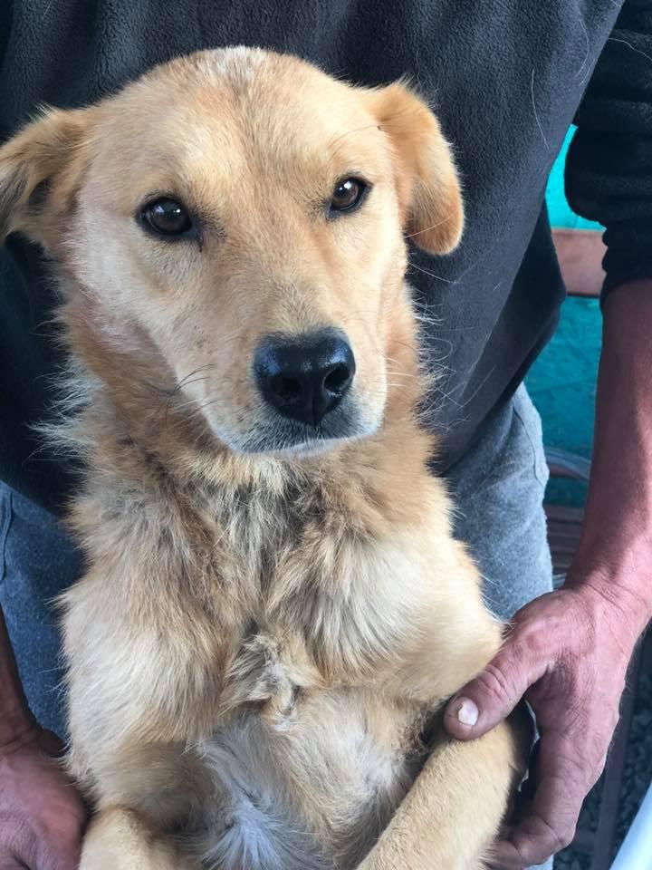 Perro rescatado en Rumania