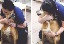 Perro va al veterinario y piensa que esta allí por los abrazos