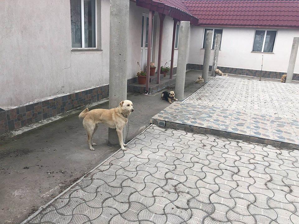 Perros atados fuera de iglesia