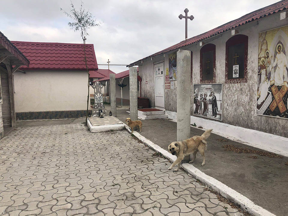 Perros fuera de iglesia