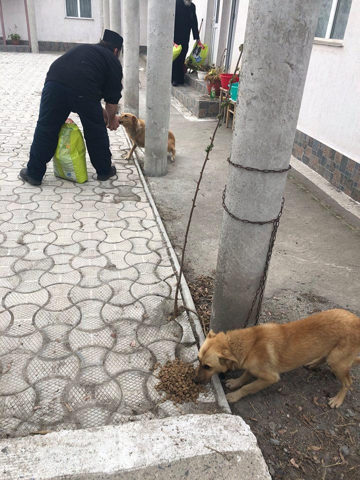 Perros rescatados comiendo