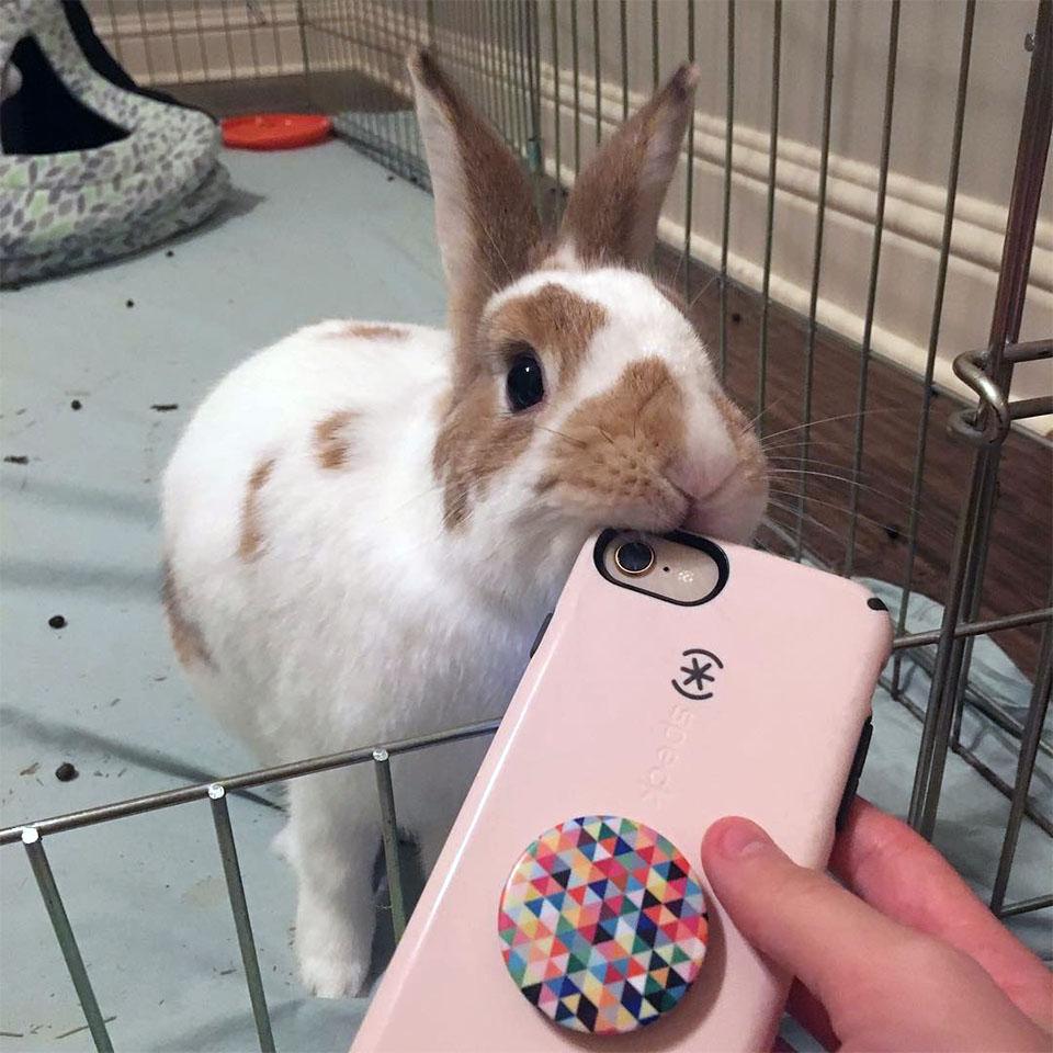 Peter muerde celular