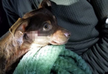 Policía dispara a pequeño perro en discusión con hombre