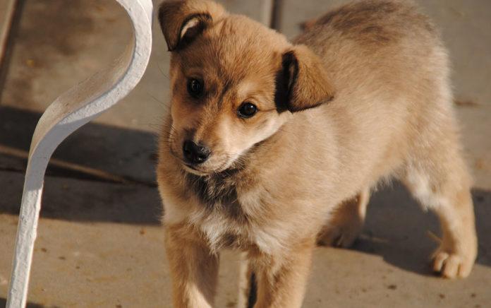 Proponen ley para que la crueldad animal sea delito nacional