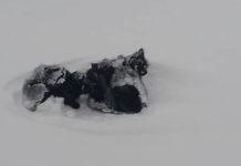 Repartidor encuentra a tres pequeños gatitos acurrucados entre la nieve