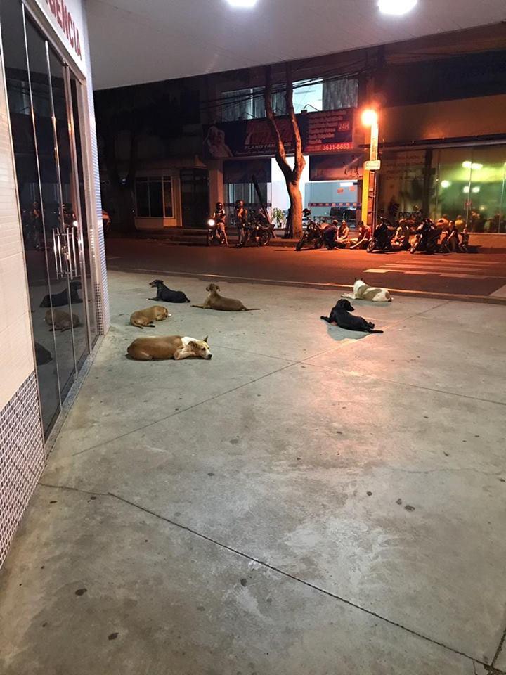 Seis perros leales esperan a su dueño fuera de hospital