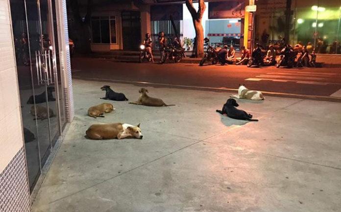 Seis perros leales persiguen ambulancia que lleva a su dueño