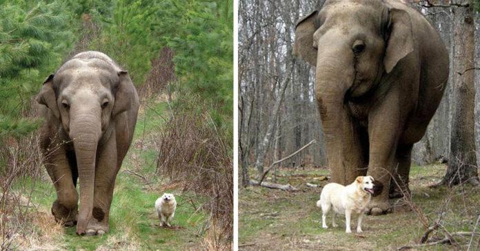 Tarra y Bella fueron mejores amigas