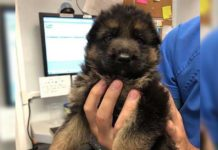 Técnica veterinaria salva la vida de un cachorrito abandonado