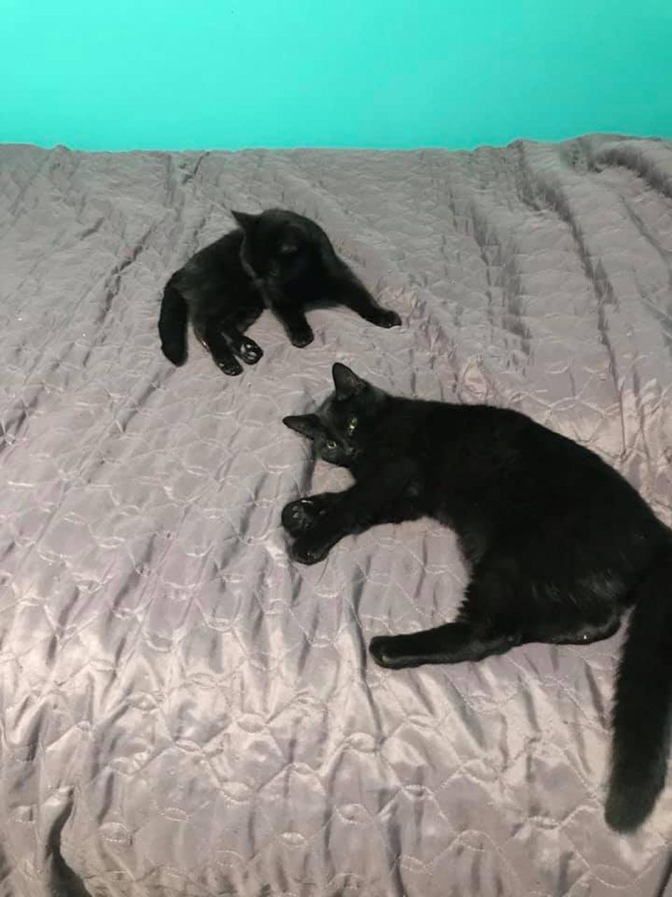gatitos rescatados entre la nieve
