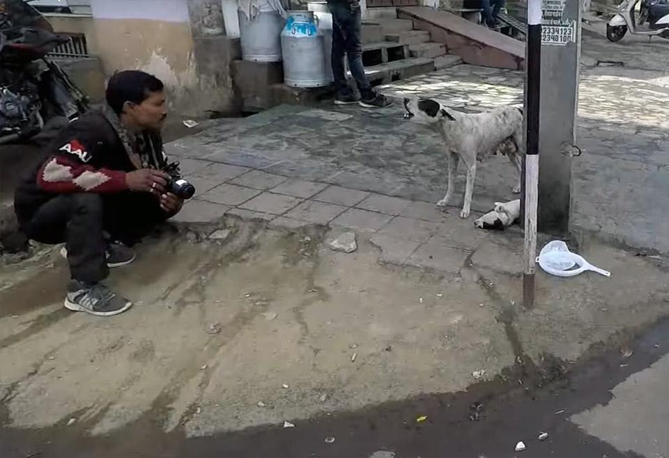 Animal Aid Unlimited rescatando a un cachorro